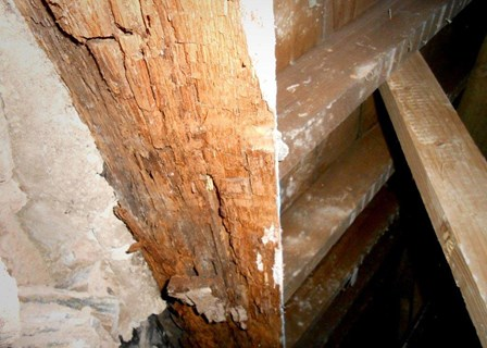Dry rot in timbers; red crumbly wood, at The Guildhall, Derry, Northern Ireland