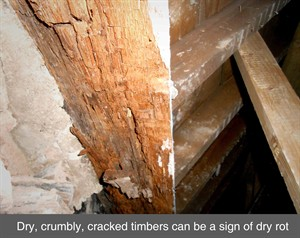 002 dry rot wet rot timber splice repair damp timber truss wood belfast dublin northern ireland NI